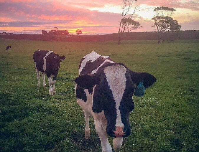 nachhaltigkeitstransformation fleischbranche